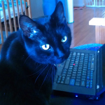 Black cat next to a computer keyboard